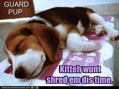GUARD PUP Kitteh wunt shred em dis time. Kitteh wunt shred em dis time.