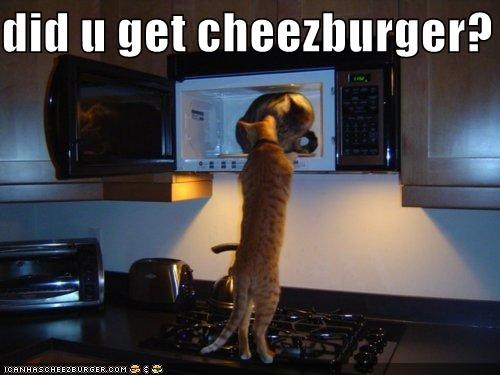 Cheezburger Image 5361048320