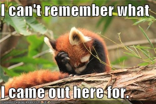 forget it,forgetful,forgot,huh,oops,red panda,remember,thats-a-bummer-man,thinking,what did i come out here for,what