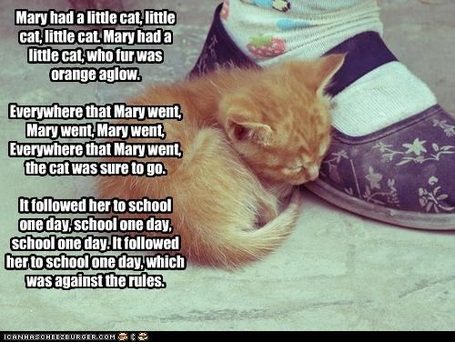Mary had a little cat, little cat, little cat. Mary had a little cat, who fur was orange aglow. Everywhere that Mary went, Mary went, Mary went, Everywhere that Mary went, the cat was sure to go. It followed her to school one day, school one day, school one day. It followed her to school one day, which was against the rules.