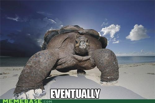 eventually slow and steady SOON tortoise turtle - 5361496320