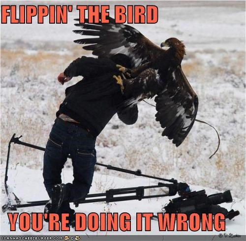 back off,eagle,flipping the bird,gotcha,in soviet russia,photographer,wildlife photography
