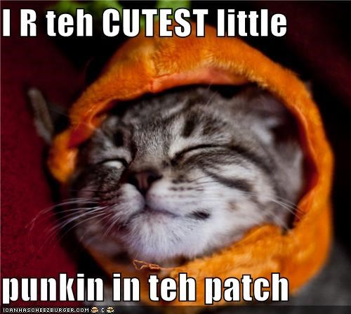 am,caption,captioned,cat,costume,cutest,dressed up,I,kitten,meowloween,patch,pumpkins,sleeping
