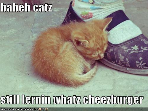 Cheezburger Image 5362574592