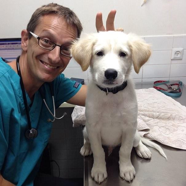 aww clinic hospital photos cute vet funny animals - 5362949