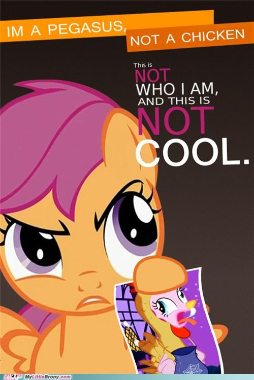 bwak chicken know your meme meme not a costume Scootaloo serious - 5363504640