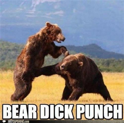 animals,bears,dick punch,fight,fist fight,ouch,punching,thats-a-bummer-man