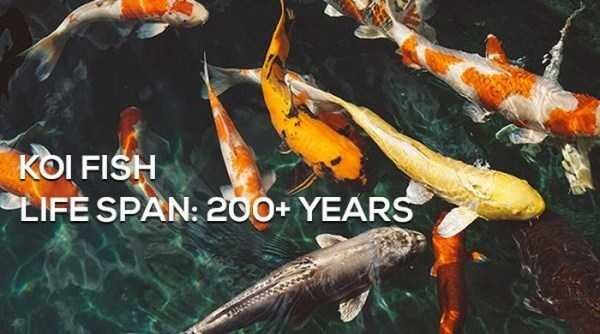 life facts long interesting life span animals - 5363717