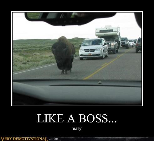 bison,boss,cars,Pure Awesome,road,wtf