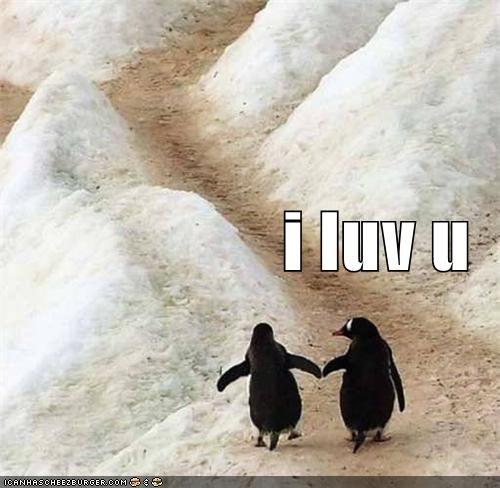 aniamls awww cute i love you love penguins - 5363813632