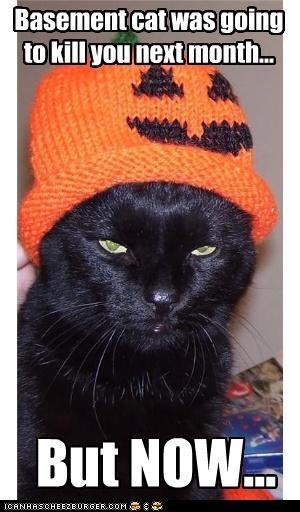 angry basement cat halloween hats meowloween pumpkins ugs - 5363870976