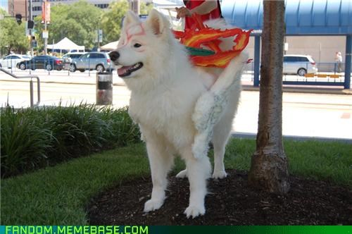 animal cosplay capcom cosplay costume dogs Ōkami