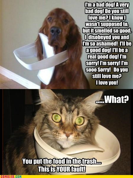 Caught in the act!  Dogs vs Cats