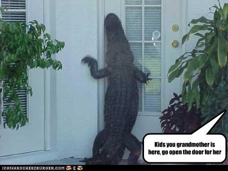 alligator animals grandma grandmas-her grandmother - 5364407040