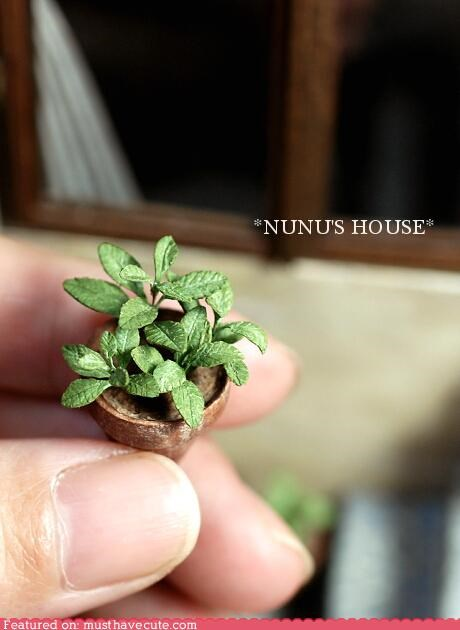 miniature nunus-house plant tiny - 5364514816