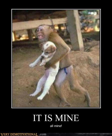 animals dogs hilarious mine monkey - 5365099776