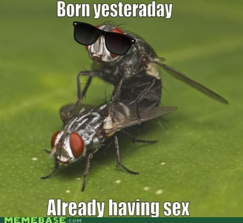 born fly Memes puns sex spelling yesteraday - 5365125888