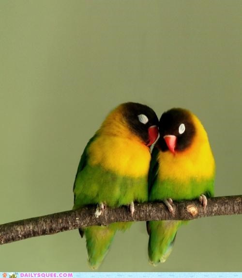 biology bird birds cuddling figure of speech Hall of Fame incorrect love lovey dovey loving - 5365613568