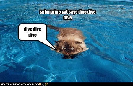 submarine cat says dive dive dive dive dive dive