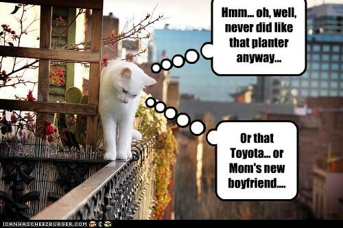 accident,boyfriend,bright side,caption,captioned,cat,didnt,dislike,do not want,like,planter,toyota