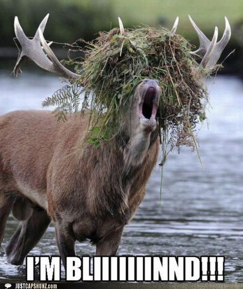 animals blind moose theres-your-problem yelling you sure about that