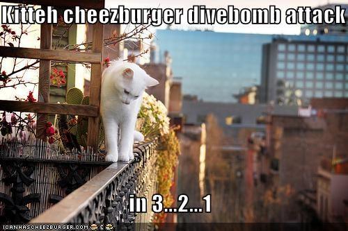 Cheezburger Image 5367560704