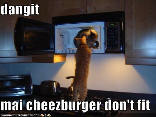 Cheezburger Image 5367625216