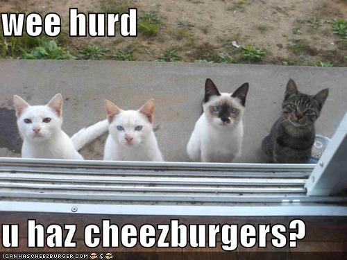 Cheezburger Image 5367778304