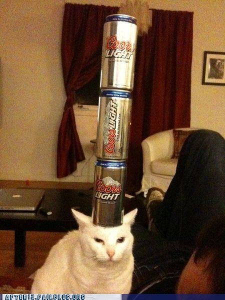 beer,beer can,Cats,coordination,coors light,crunk critters,stack