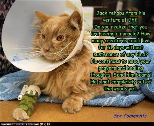 Jack rehabs