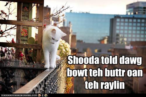 Shooda told dawg bowt teh buttr oan teh raylin