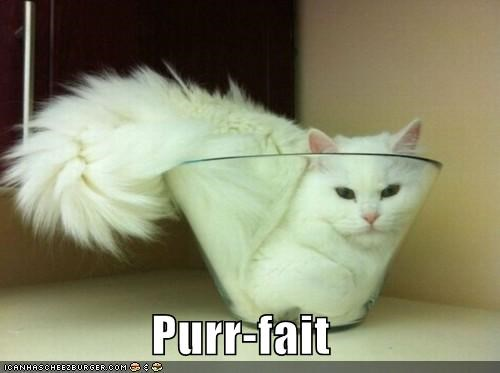 best of the week caption captioned cat dish fit Hall of Fame parfait pun purr suffix - 5368428544