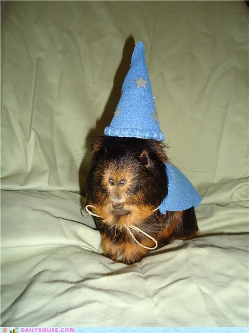 adorable costume dressed up guinea pig halloween homemade reader squees robe wizard