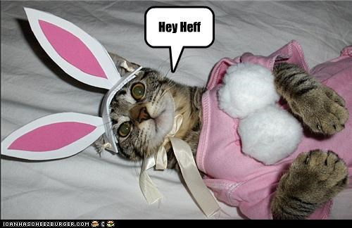 bunny caption captioned cat costume dressed up heff Hey Hugh Heffner playboy