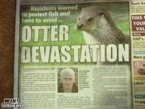 headline,news,newspaper,otter,pun,wait what