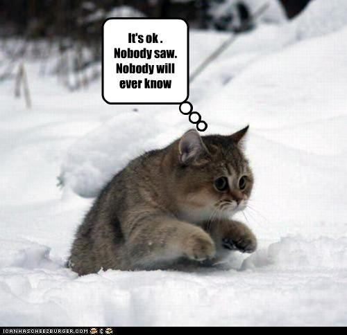 caption captioned cat crime ever evidence idgi lolwut no nobody Okay paranoid saw sneaking snow will - 5369112320