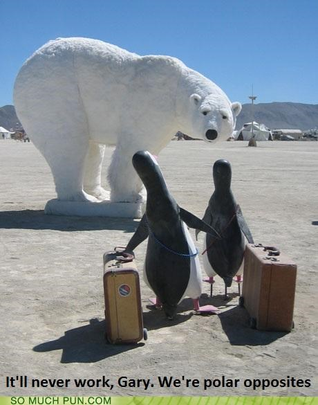 breakup,double meaning,literalism,opposites,penguin,polar,polar bear
