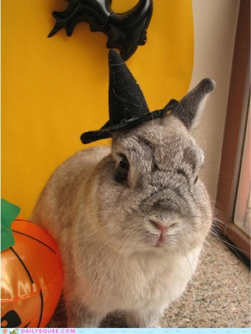 bunny combination costume dressed up Hall of Fame halloween happy bunday holiday merge rabbit