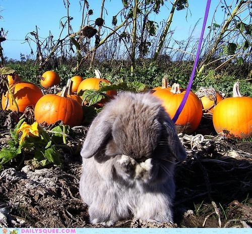 acting like animals bunny do not want friends friendship Hall of Fame halloween happy bunday jack o lanterns pumpkins rabbit Sad upset - 5369350912
