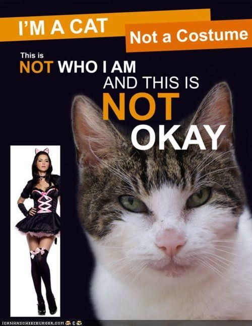 costume culture do not like halloween memecats Memes meowloween sexy - 5369371904