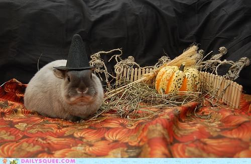 bunny,costume,dressed up,halloween,happy bunday,hat,hocus pocus,rabbit,witch