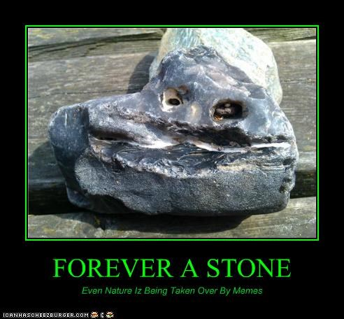 FOREVER A STONE Even Nature Iz Being Taken Over By Memes
