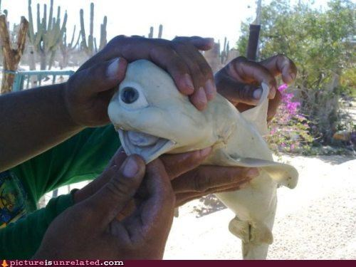cyclops eye shark wtf