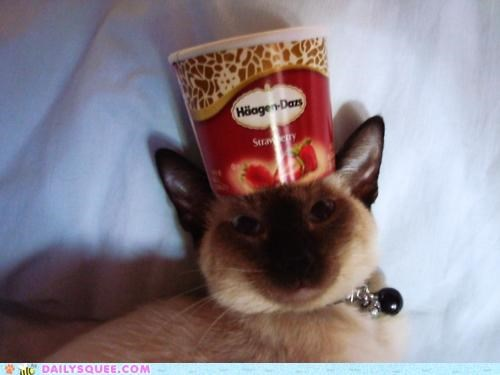 acting like animals,cat,container,hat,head,ice cream,liar,lies,lying,siamese,wearing