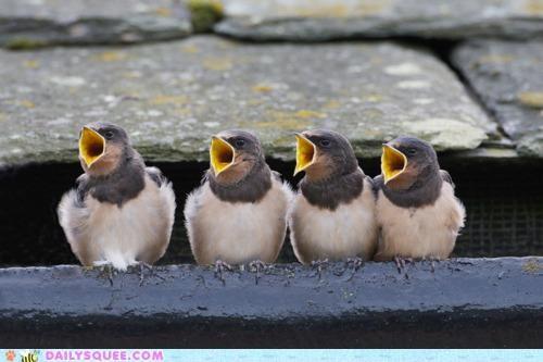 acting like animals bird birds defense explanation nonsensical people singing song tradition translation - 5369726464