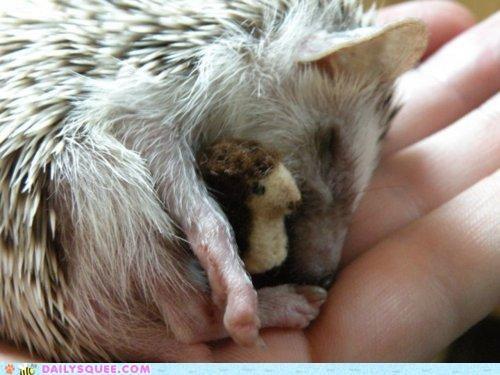 cuddling doll Hall of Fame hedgehog holding Inception meme sleeping stuffed animal - 5369736960