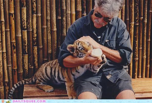 baby bottle bottle feeding cub do want drinking feeding milk tiger - 5369746176