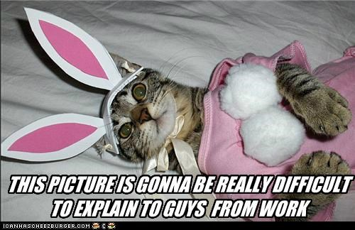 caption,captioned,cat,costume,difficult,dressed up,embarrassing,explain,guys,picture,work