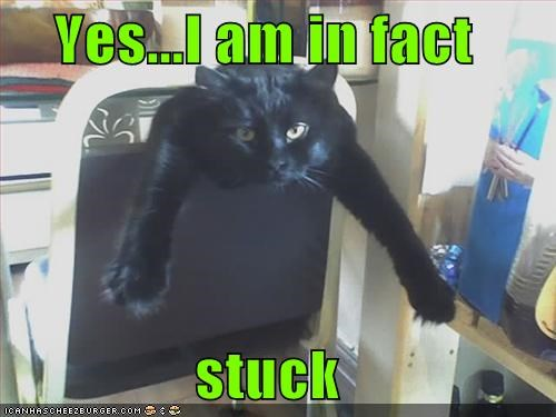 caption,captioned,cat,chair,do not want,in fact,stuck,yes