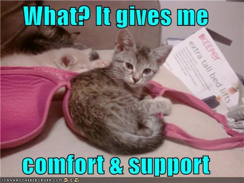 bra,caption,captioned,cat,comfort,kitten,laying,pun,reason,resting,support,what